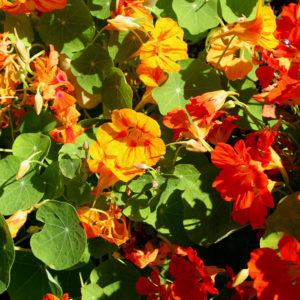 Taufstein Blumen im Garten