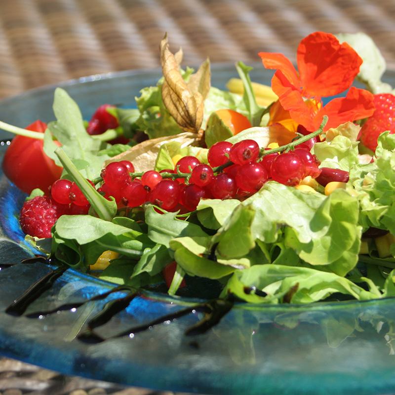 Taufstein Salat im Garten